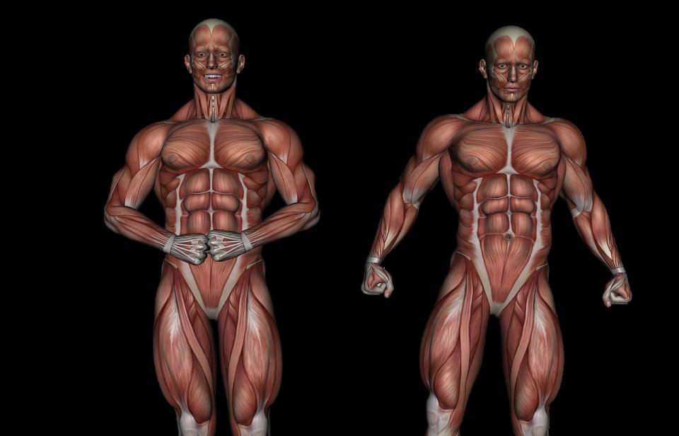 Ciekawostki o mięśniu dwugłowym uda